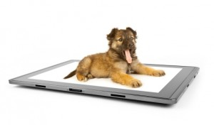 Ready to Publish Your eBook on Pet Grooming?
