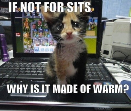 blog-kitten-keyboard