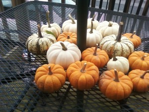"""Orange pumpkins, white pumpkins, fall is in the air. Yummy pumpkins, tasty pumpkins, eat them if you dare."" - from Jennifer T"