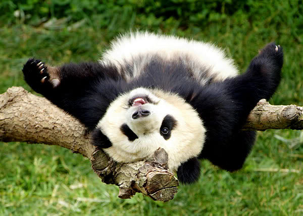blog-happy-panda