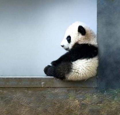 blog-panda-2