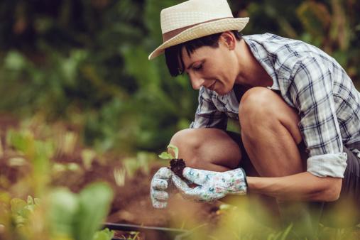 seedling ideas