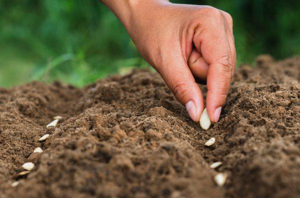 content seeding
